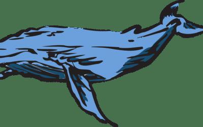 Blue Whale è come Cappuccetto Rosso nel bosco senza mappa